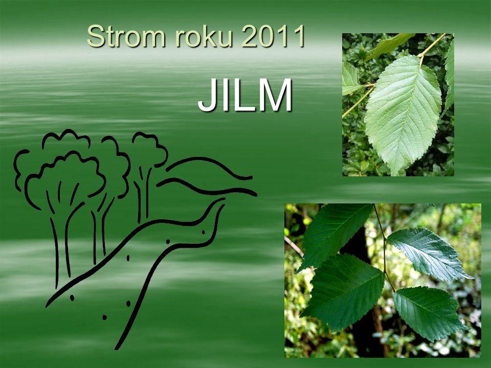 Strom roku 2011 JILM