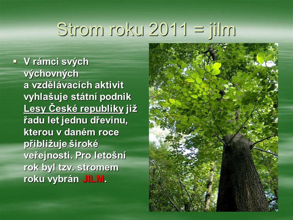 Strom roku 2011 = jilm