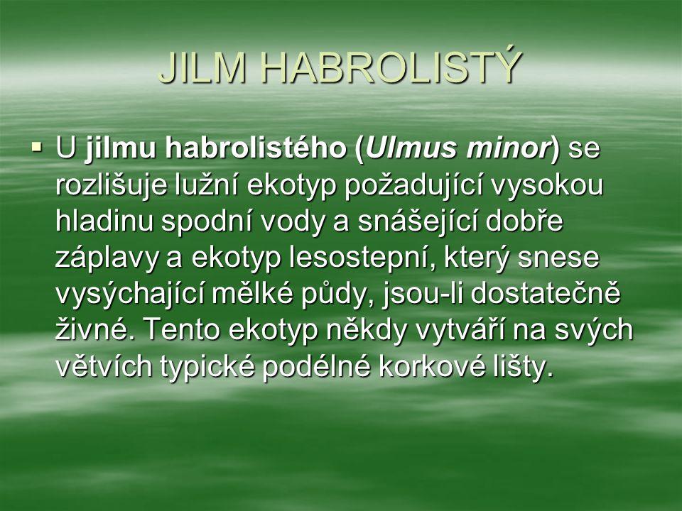 JILM HABROLISTÝ