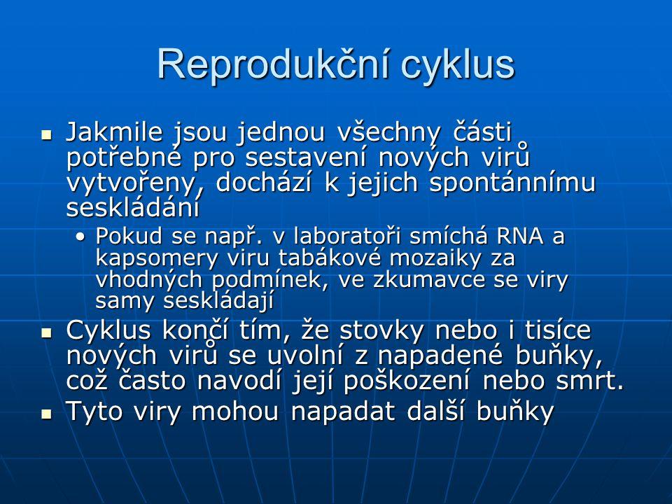 Reprodukční cyklus Jakmile jsou jednou všechny části potřebné pro sestavení nových virů vytvořeny, dochází k jejich spontánnímu seskládání.