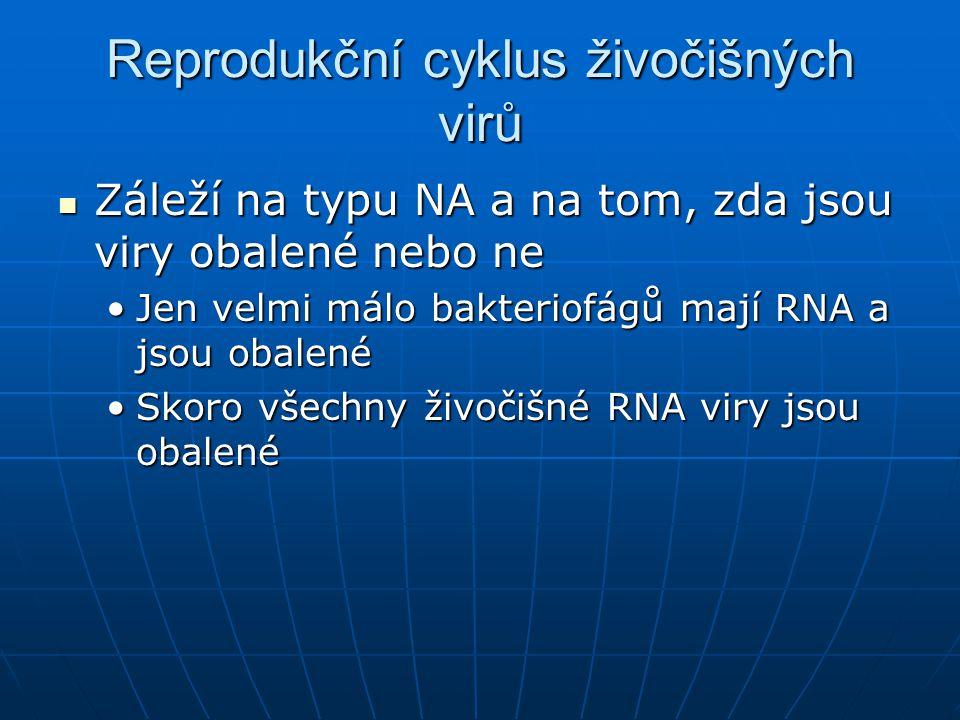 Reprodukční cyklus živočišných virů