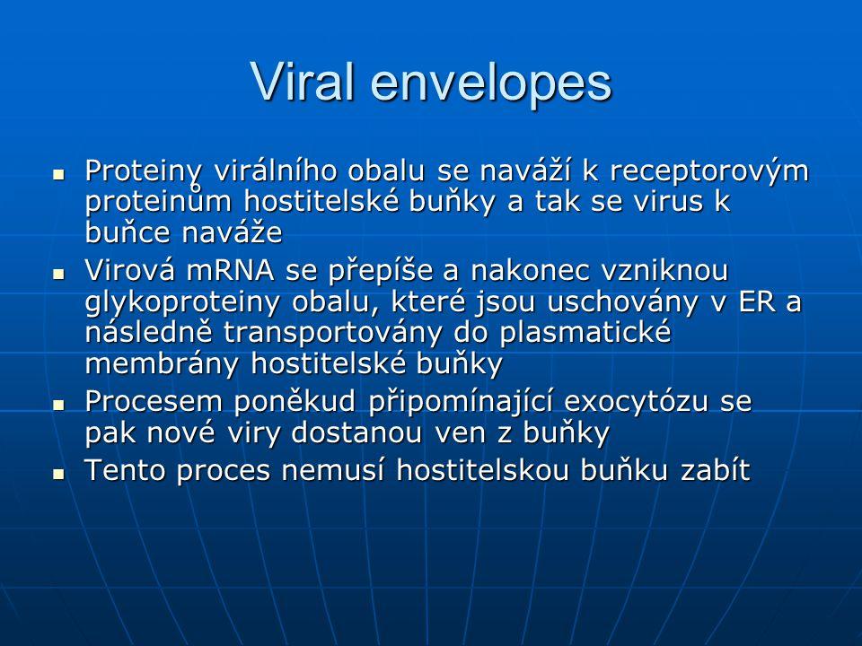 Viral envelopes Proteiny virálního obalu se naváží k receptorovým proteinům hostitelské buňky a tak se virus k buňce naváže.