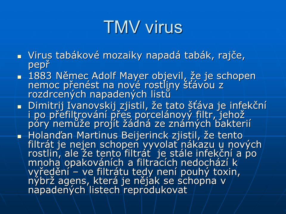 TMV virus Virus tabákové mozaiky napadá tabák, rajče, pepř