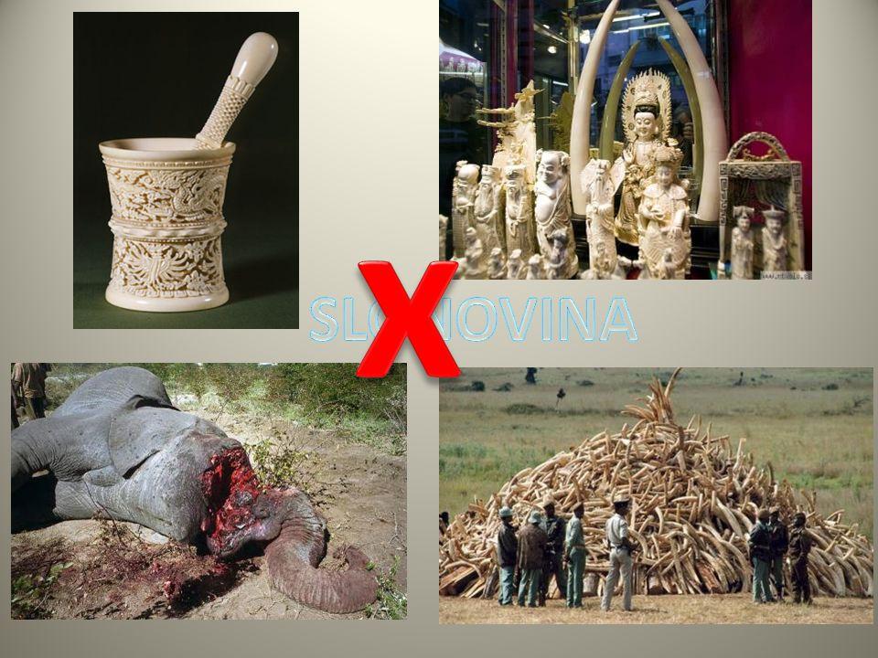 x SLONOVINA