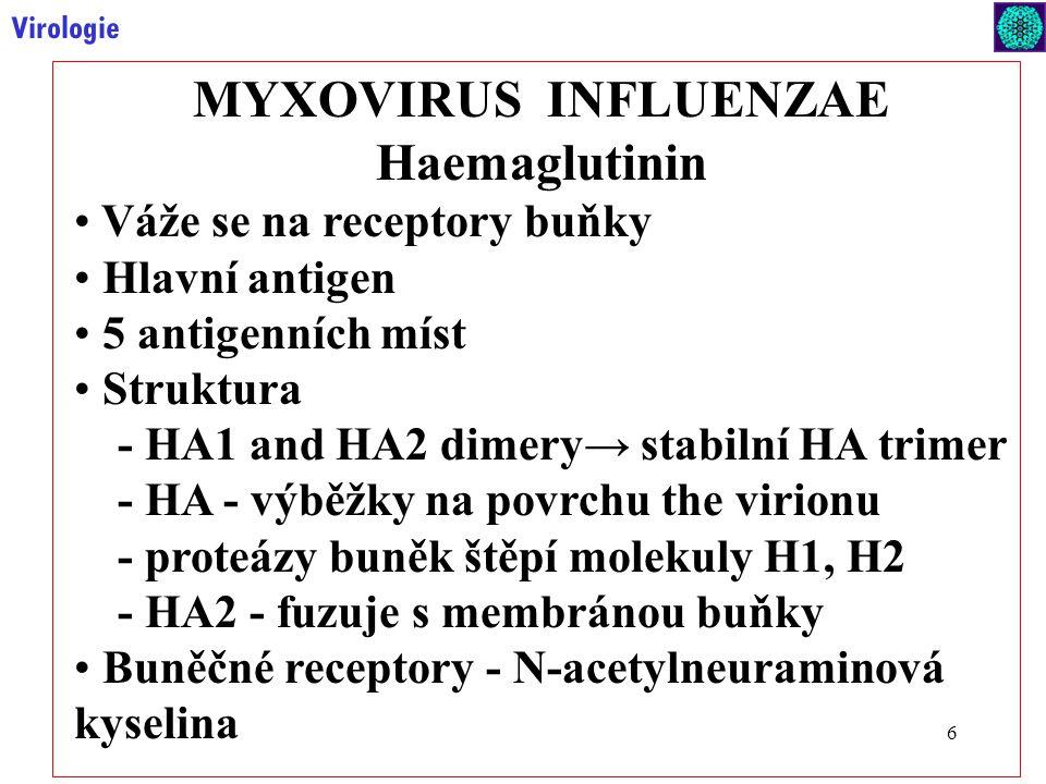 MYXOVIRUS INFLUENZAE Haemaglutinin