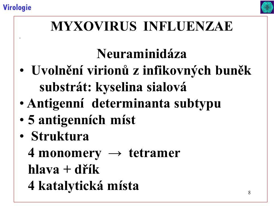MYXOVIRUS INFLUENZAE Neuraminidáza