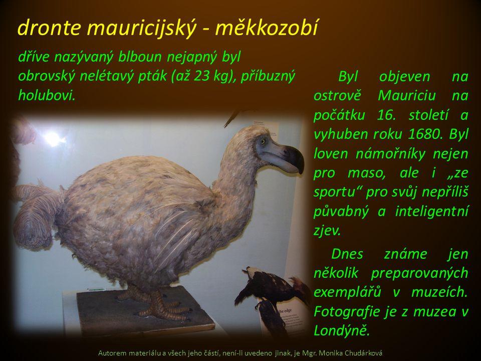 dronte mauricijský - měkkozobí