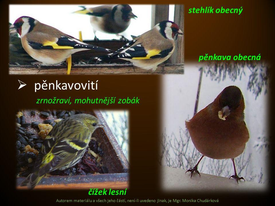pěnkavovití stehlík obecný pěnkava obecná zrnožraví, mohutnější zobák