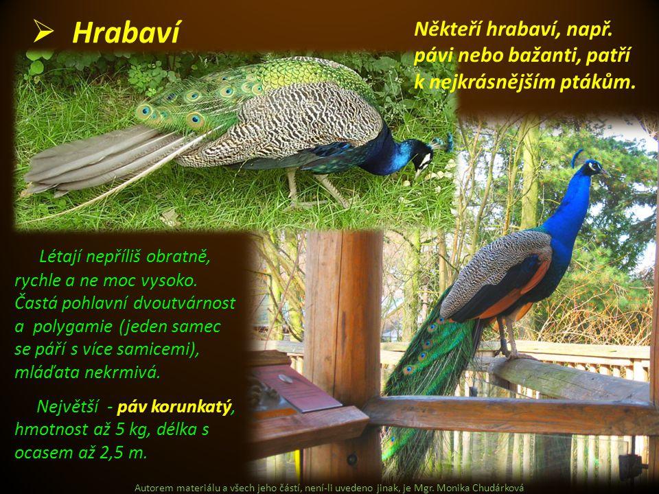 Hrabaví Někteří hrabaví, např. pávi nebo bažanti, patří k nejkrásnějším ptákům.