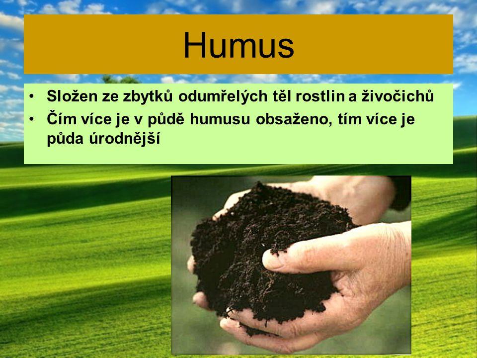 Humus Složen ze zbytků odumřelých těl rostlin a živočichů