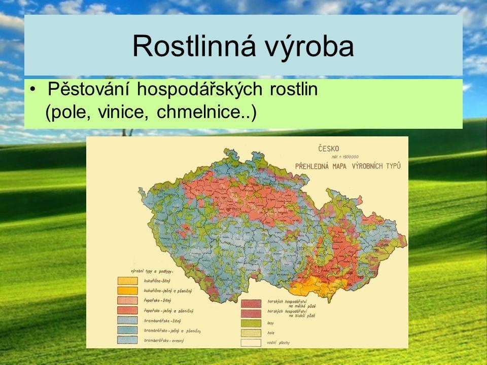 Rostlinná výroba Pěstování hospodářských rostlin