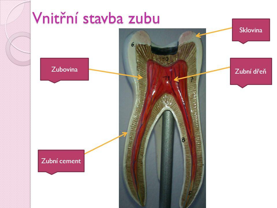 Vnitřní stavba zubu Sklovina Zubovina Zubní dřeň Zubní cement