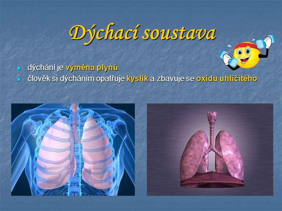 Dýchací soustava dýchání je výměna plynů