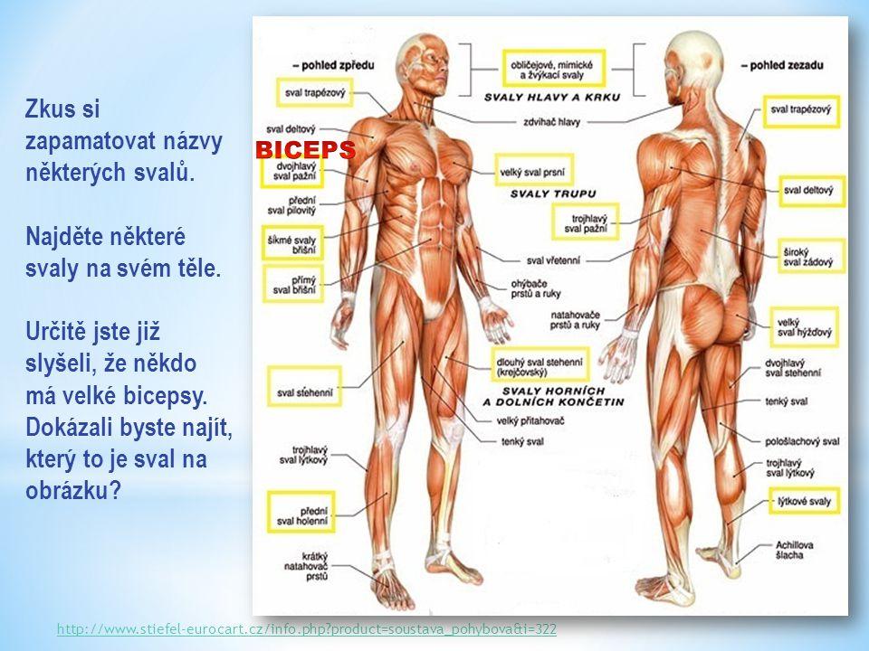 Zkus si zapamatovat názvy některých svalů.