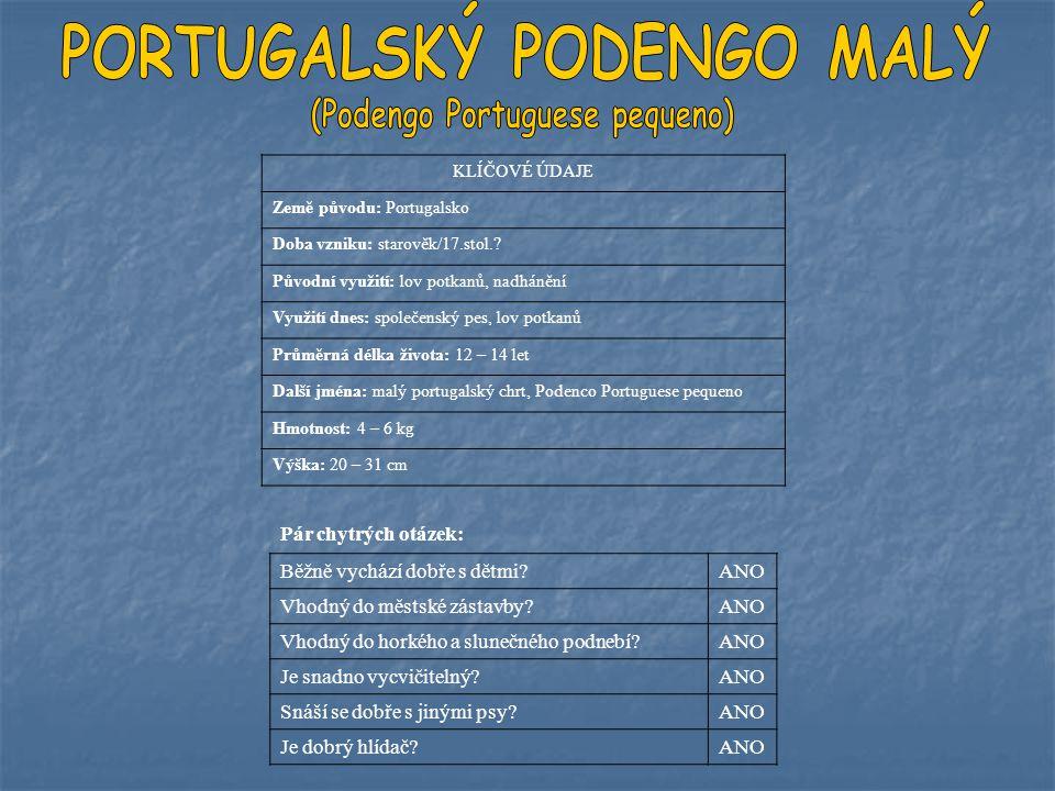 PORTUGALSKÝ PODENGO MALÝ (Podengo Portuguese pequeno)