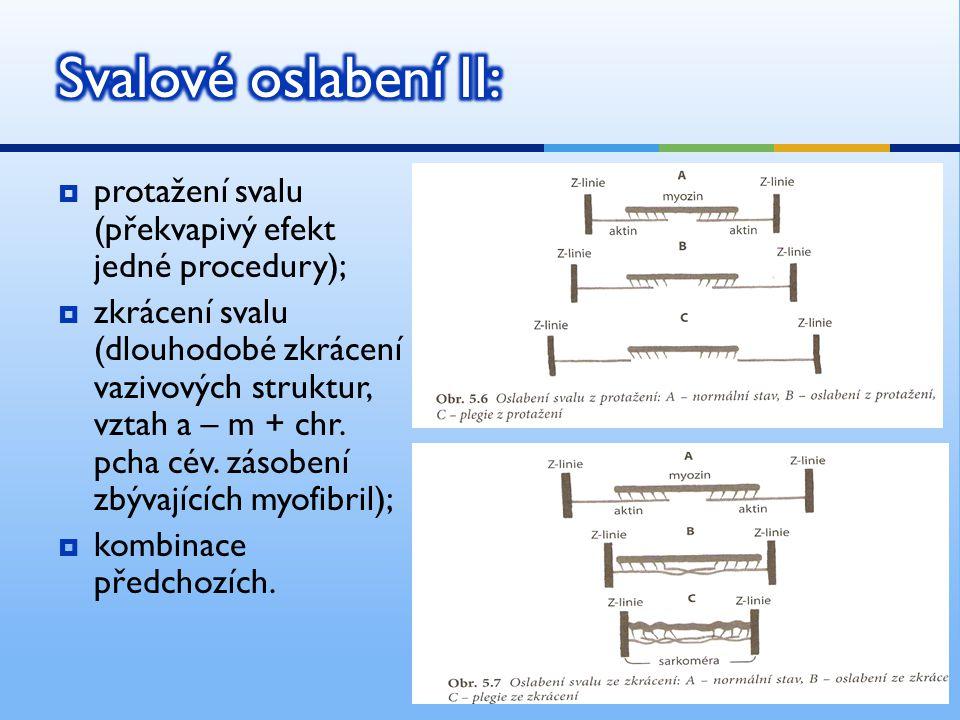 Svalové oslabení II: protažení svalu (překvapivý efekt jedné procedury);
