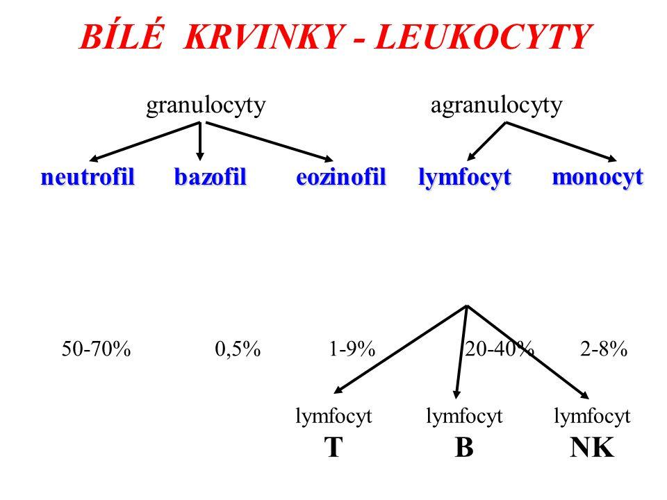BÍLÉ KRVINKY - LEUKOCYTY