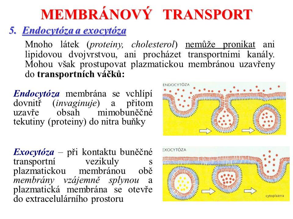 MEMBRÁNOVÝ TRANSPORT 5. Endocytóza a exocytóza