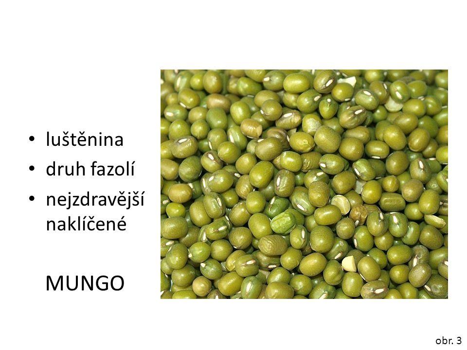 luštěnina druh fazolí nejzdravější naklíčené MUNGO obr. 3