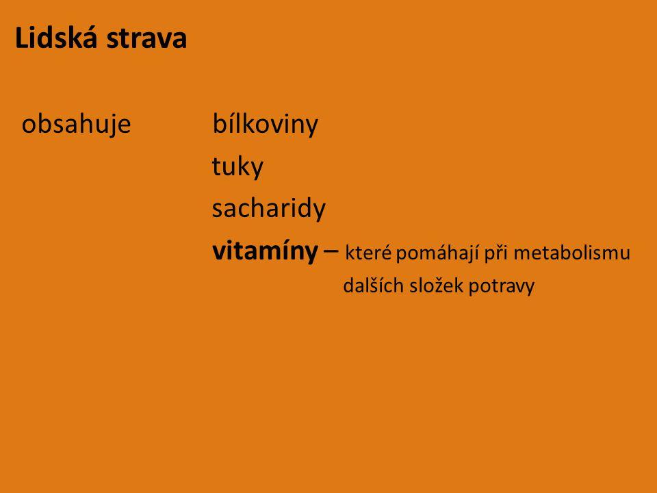 Lidská strava obsahuje bílkoviny tuky sacharidy
