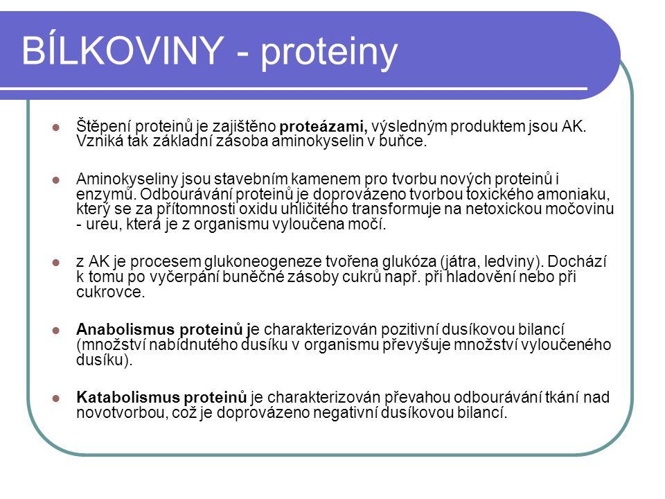 BÍLKOVINY - proteiny Štěpení proteinů je zajištěno proteázami, výsledným produktem jsou AK. Vzniká tak základní zásoba aminokyselin v buňce.