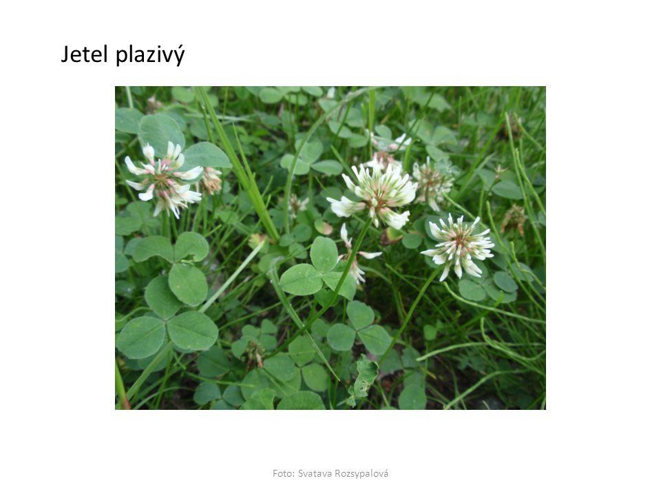 Foto: Svatava Rozsypalová