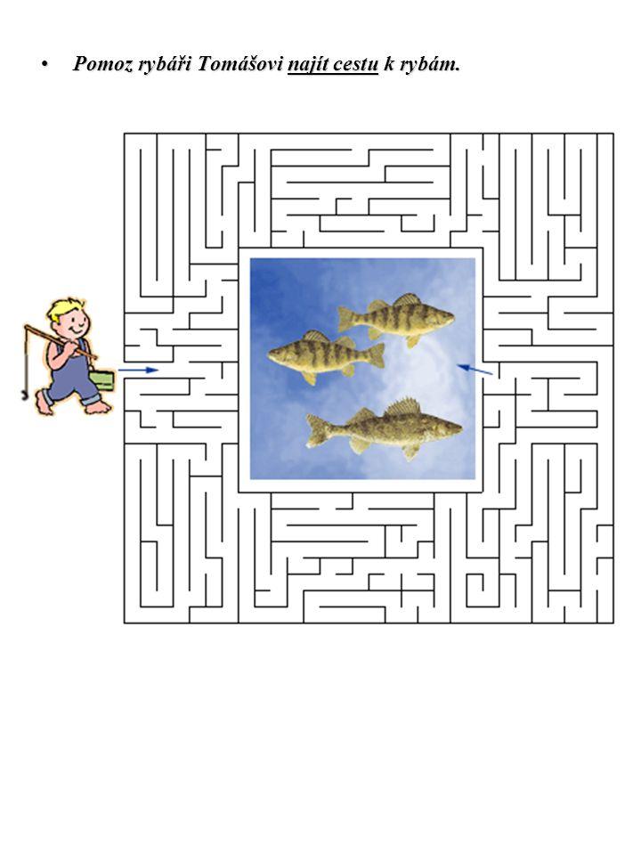 Pomoz rybáři Tomášovi najít cestu k rybám.