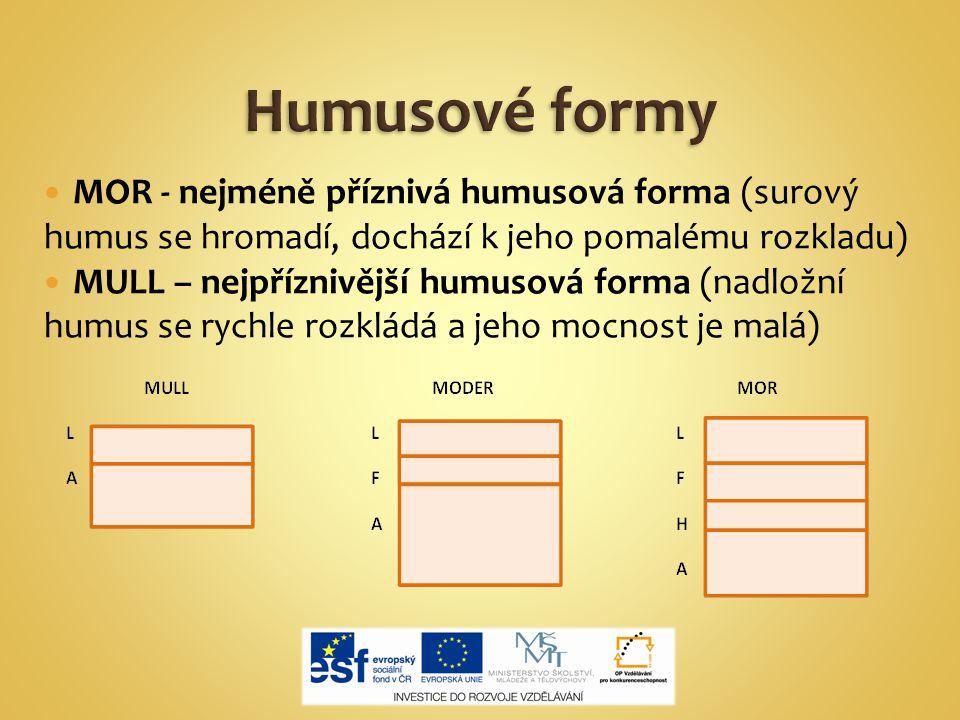 Humusové formy MOR - nejméně příznivá humusová forma (surový humus se hromadí, dochází k jeho pomalému rozkladu)