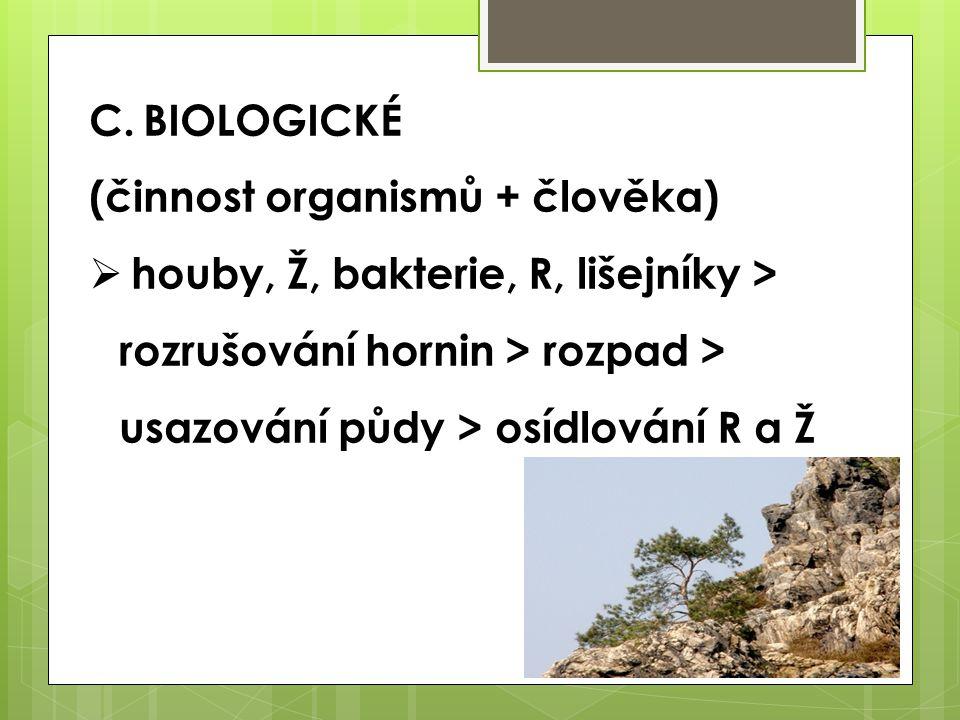 BIOLOGICKÉ (činnost organismů + člověka) houby, Ž, bakterie, R, lišejníky > rozrušování hornin > rozpad > usazování půdy > osídlování R a Ž.