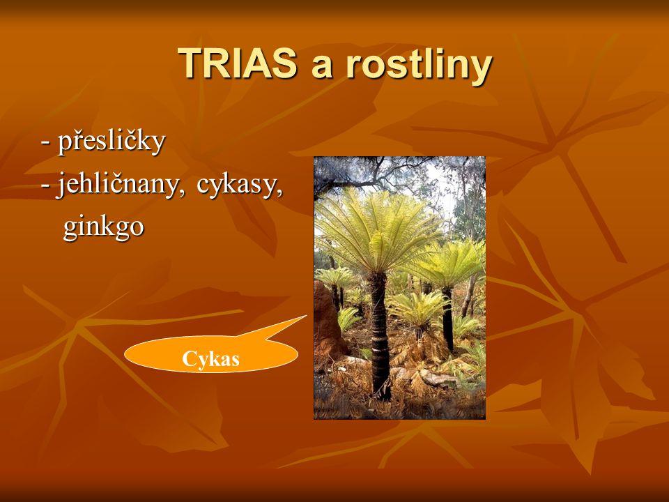 TRIAS a rostliny - přesličky - jehličnany, cykasy, ginkgo Cykas