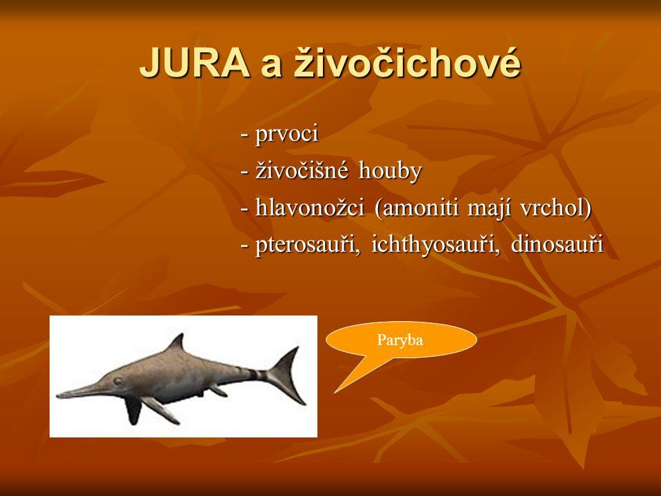 JURA a živočichové - prvoci - živočišné houby