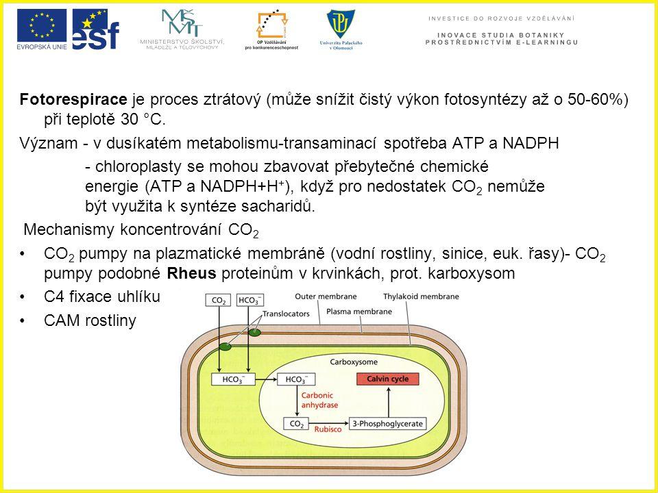 Význam - v dusíkatém metabolismu-transaminací spotřeba ATP a NADPH