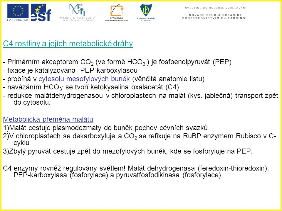 C4 rostliny a jejích metabolické dráhy