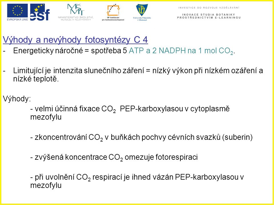 Výhody a nevýhody fotosyntézy C 4