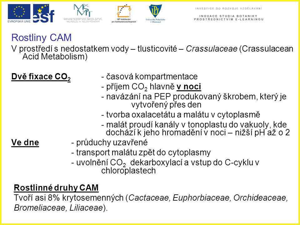 Rostliny CAM V prostředí s nedostatkem vody – tlusticovité – Crassulaceae (Crassulacean Acid Metabolism)