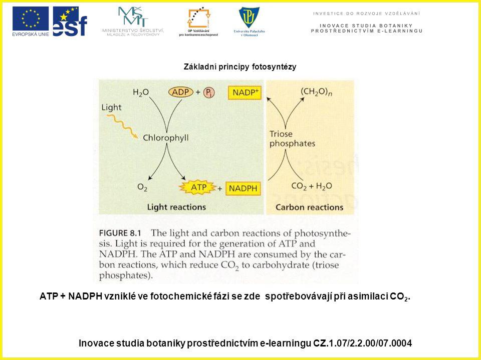 Základní principy fotosyntézy