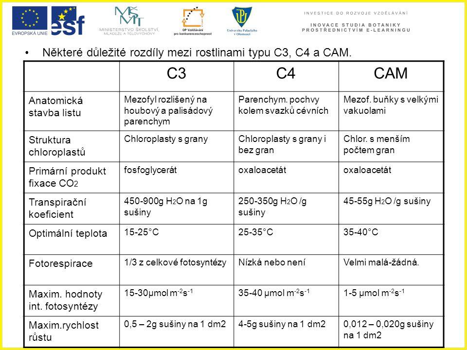 C3 C4 CAM Některé důležité rozdíly mezi rostlinami typu C3, C4 a CAM.