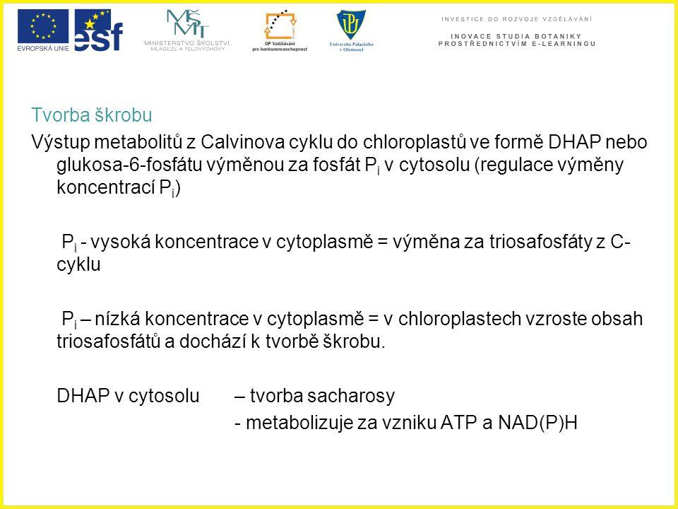 DHAP v cytosolu – tvorba sacharosy