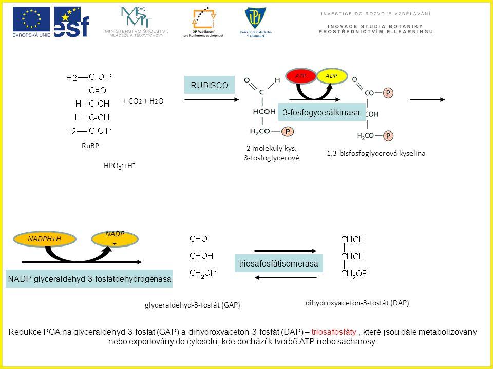 1,3-bisfosfoglycerová kyselina HPO3-+H+