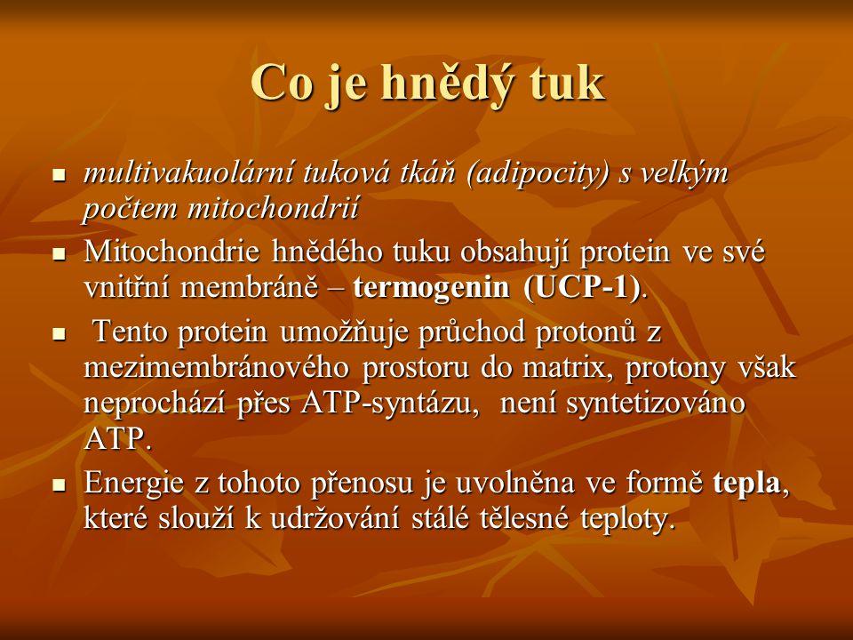 Co je hnědý tuk multivakuolární tuková tkáň (adipocity) s velkým počtem mitochondrií.