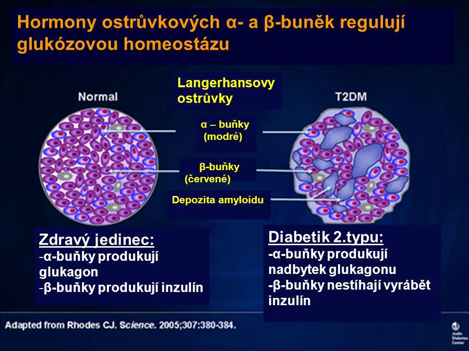 Hormony ostrůvkových α- a β-buněk regulují glukózovou homeostázu
