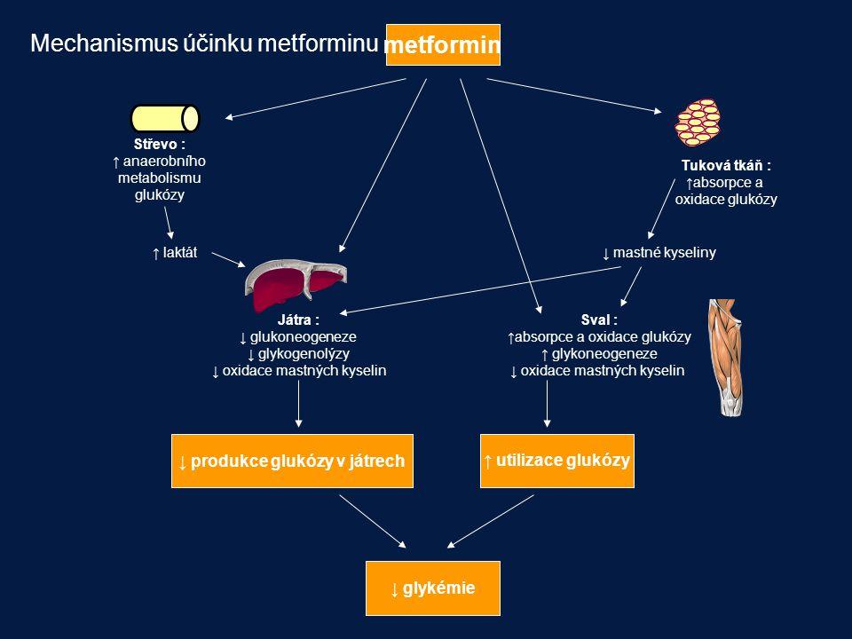 ↓ produkce glukózy v játrech