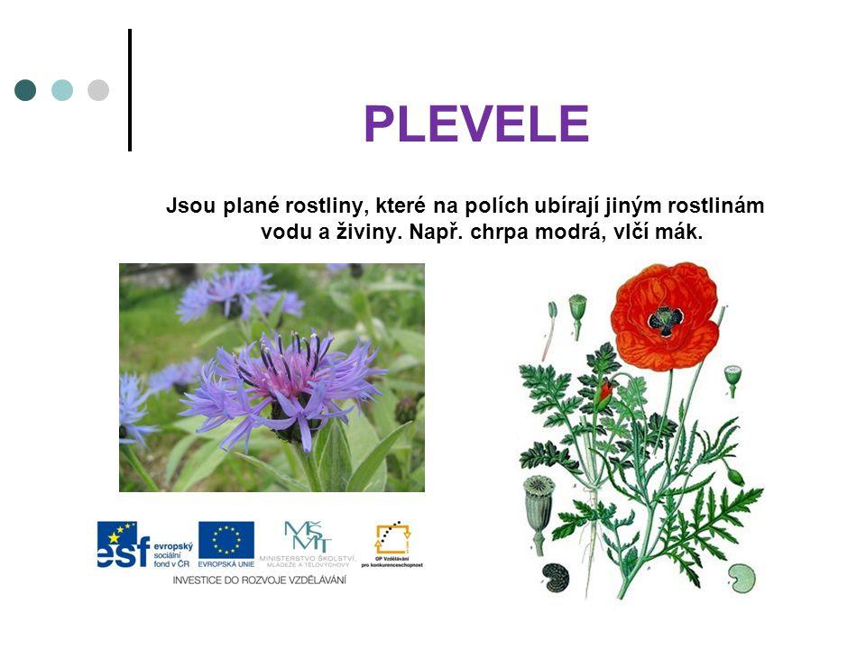 PLEVELE Jsou plané rostliny, které na polích ubírají jiným rostlinám vodu a živiny.