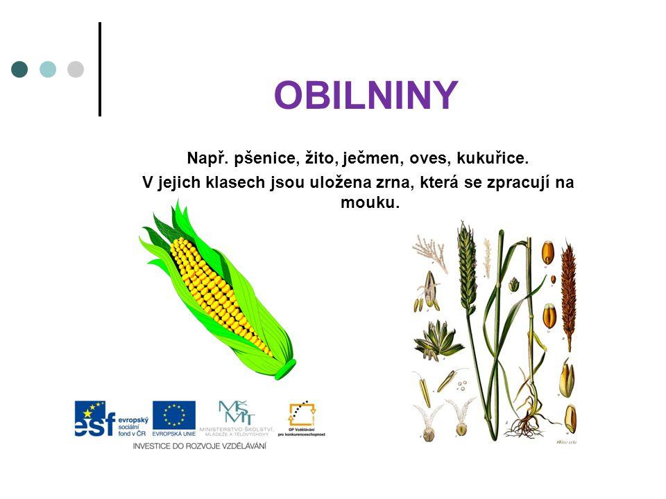 OBILNINY Např. pšenice, žito, ječmen, oves, kukuřice.