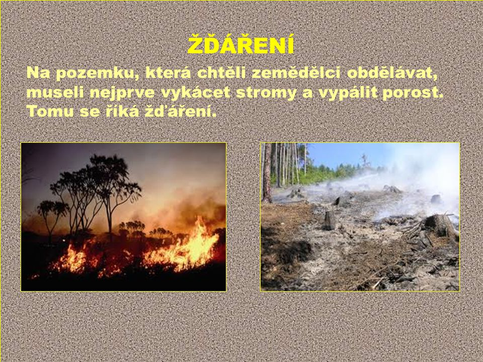 ŽĎÁŘENÍ Na pozemku, která chtěli zemědělci obdělávat, museli nejprve vykácet stromy a vypálit porost.