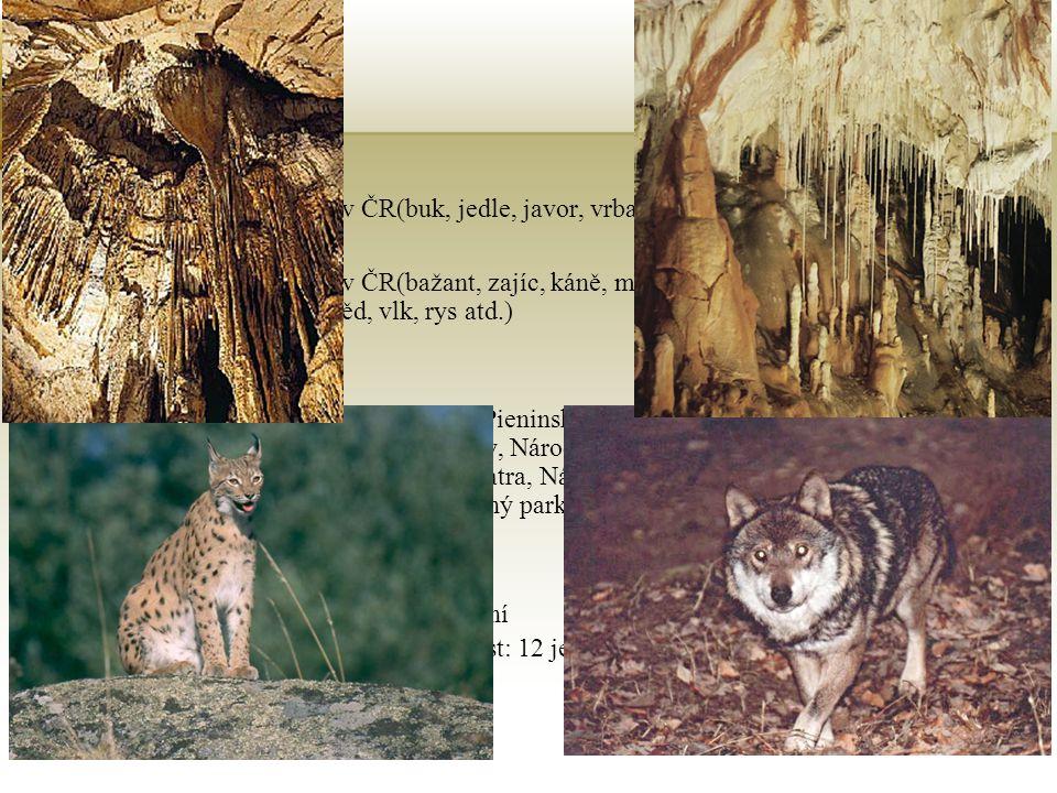Příroda Vložte obrázek rostliny nebo zvířete žijícího v zemi. Vegetace