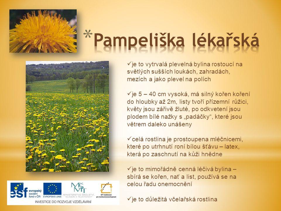 Pampeliška lékařská je to vytrvalá plevelná bylina rostoucí na světlých sušších loukách, zahradách, mezích a jako plevel na polích.