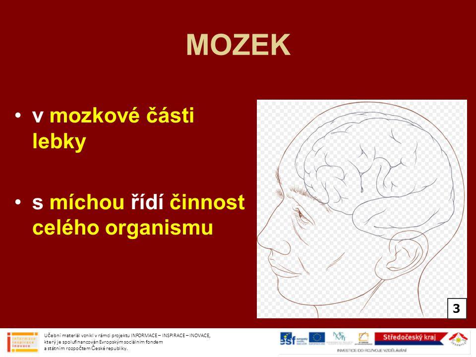 MOZEK v mozkové části lebky s míchou řídí činnost celého organismu 3