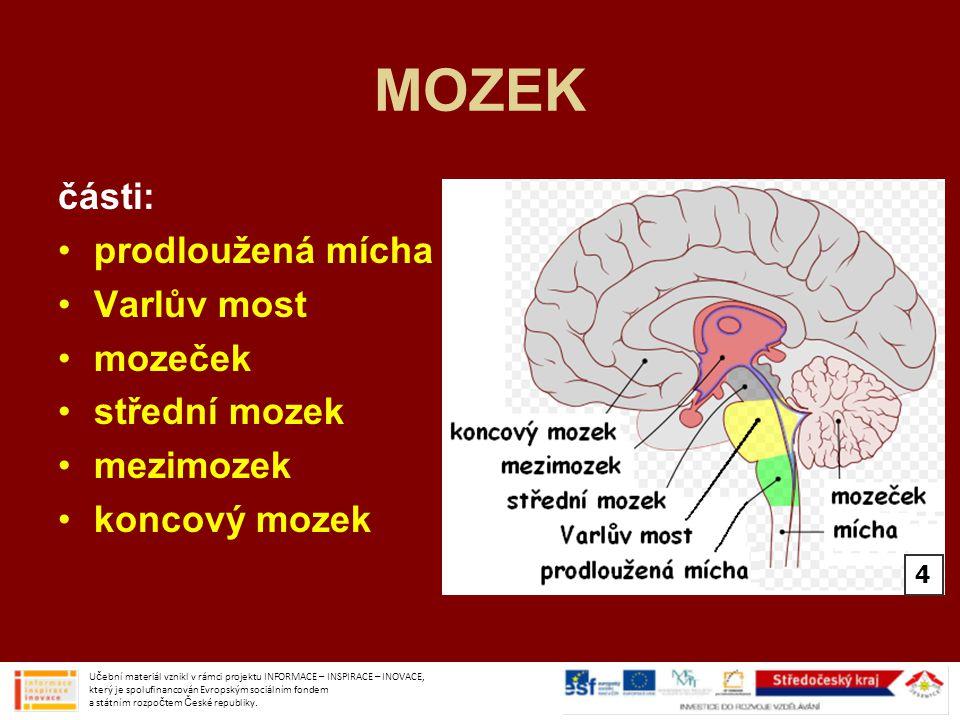 MOZEK části: prodloužená mícha Varlův most mozeček střední mozek