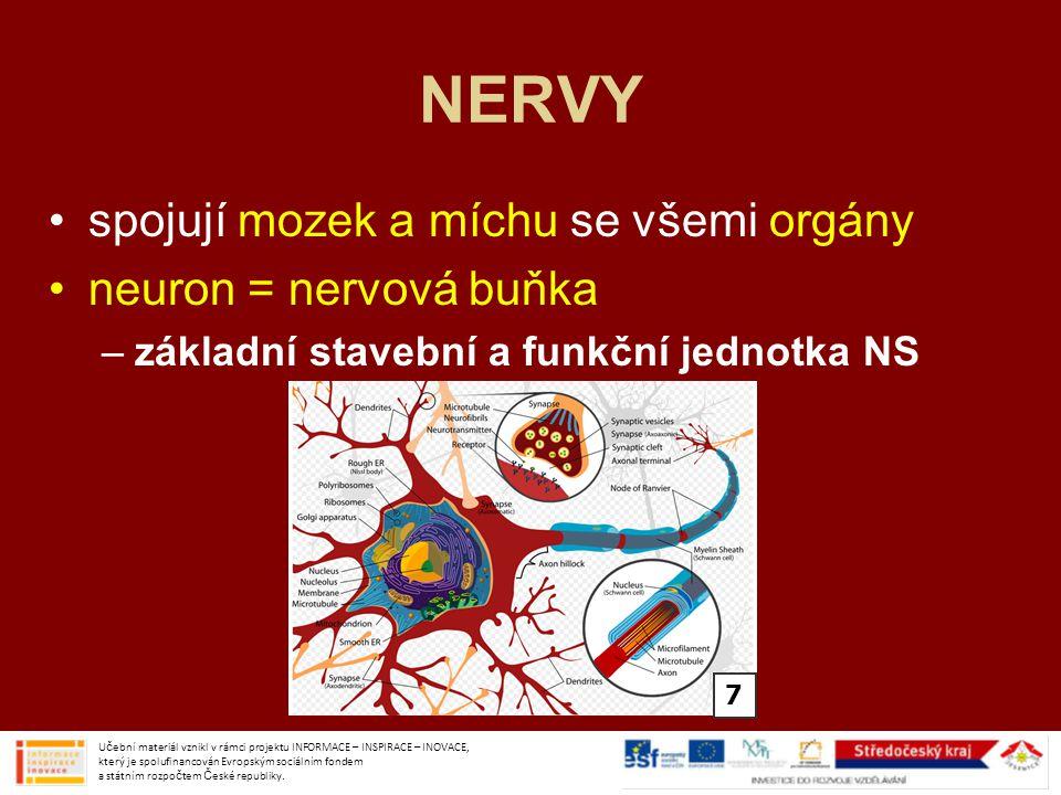 NERVY spojují mozek a míchu se všemi orgány neuron = nervová buňka